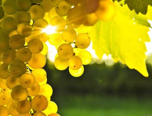 A szőlő finom, egészséges … ismerd meg mit is ad számodra